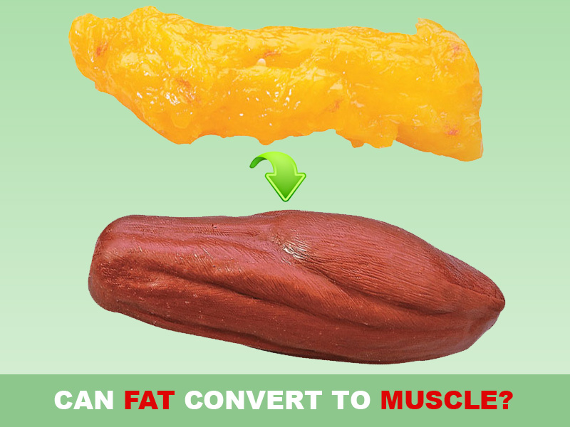 Does Fat Convert To Muscle 93